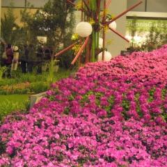 Blütenkaskade